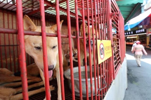 韩国首尔全面禁止屠狗 传统习俗被废除 所有屠狗场关门