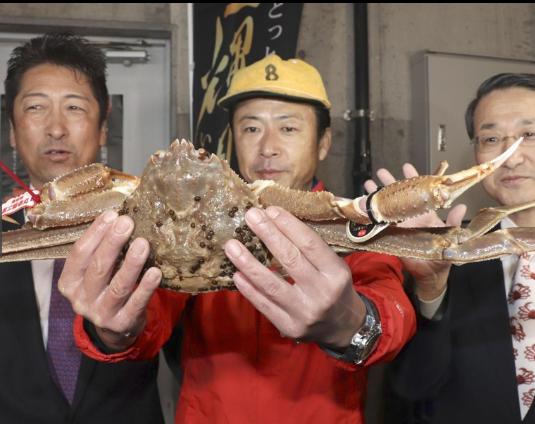 日本螃蟹贵吗?日本螃蟹500万破吉尼斯世界纪录