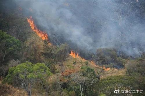 昌江一消防员对待遇不满放火毁林 两个多月内放火8次 火烧林地上