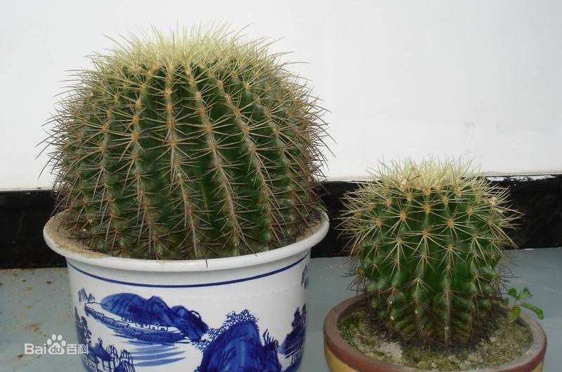 适合办公室的绿植有哪些?办公室养什么植物运气好?