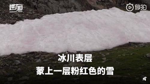 阿尔卑斯山出现粉色冰川 表面蒙上一层粉红色的雪