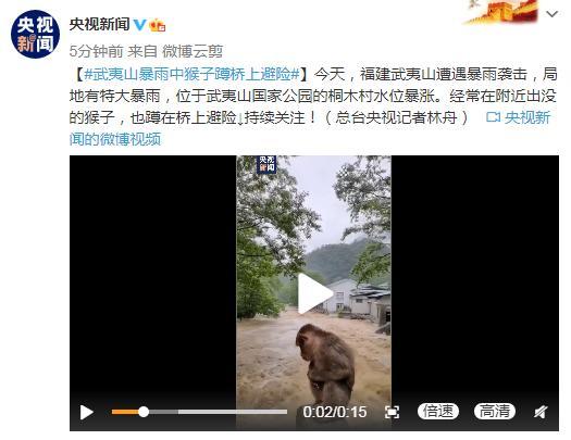 福建武夷山暴雨中猴子蹲桥上避险 惊惶失措弱小无助
