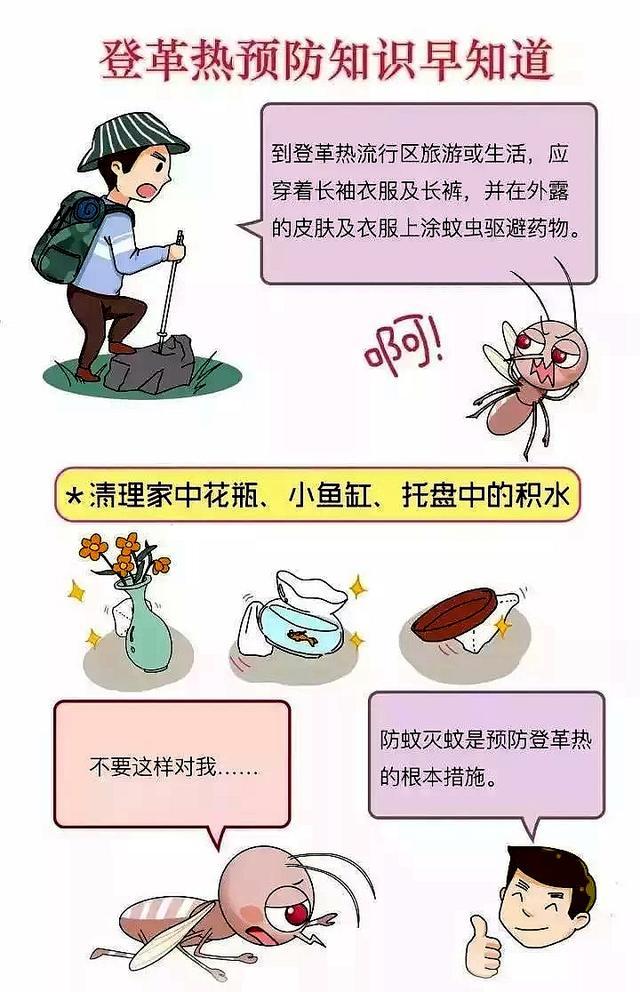 登革热花蚊子图片_江苏句容出现1例登革热病例 哪些人群容易感染?_中国网