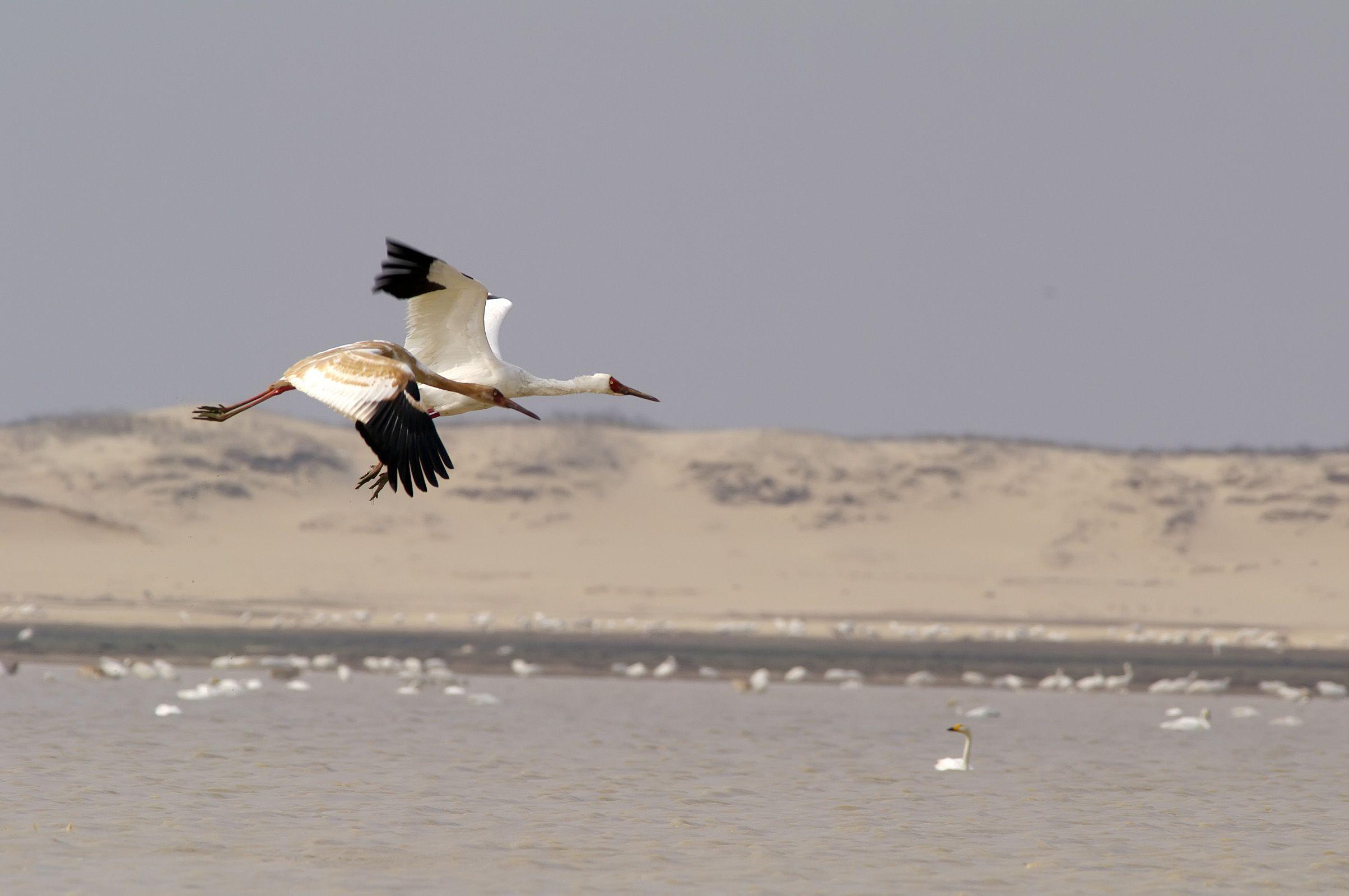 高水位将影响鄱阳湖越冬水鸟 每年超60万只水鸟越冬