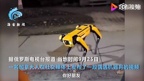 机器狗夜晚独自在街头游荡 见到人还友好打招呼
