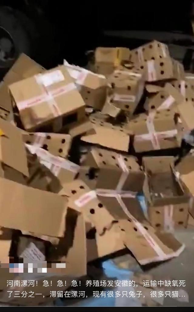 韵达回应数千只宠物滞留物流园死亡 并未运送活体动物包裹