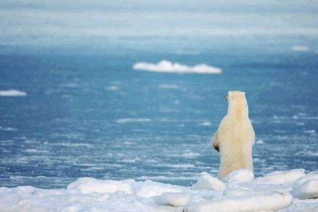 """北极恐将面临""""夏季无冰""""状况"""