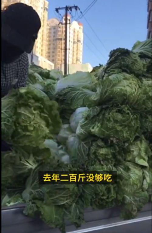 东北大娘雇车囤300斤白菜 网友:这很东北!
