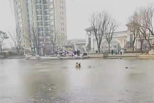 65岁保洁员跳冰湖救出6岁女童 救人时一个细节令人感动万分
